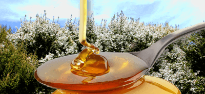 Manuka bush honey