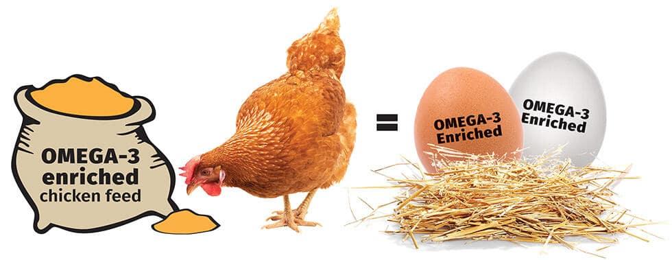 Omega3 Eggs Chia Seeds Superfood