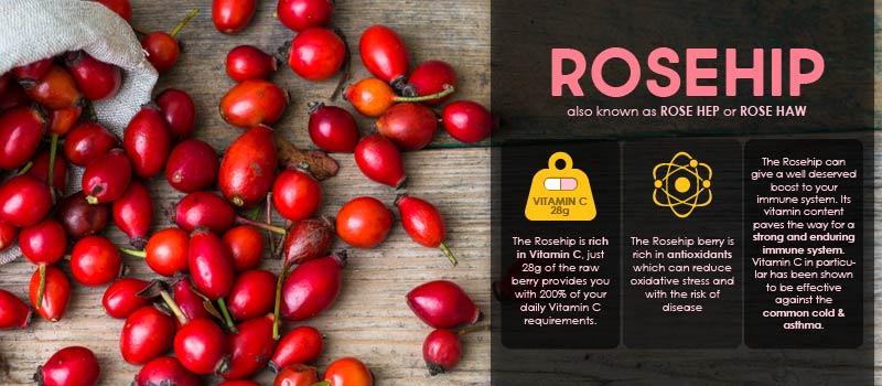Rosehip benefits