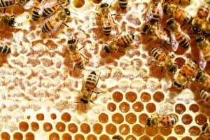 Honey health benefits is great for adults or children