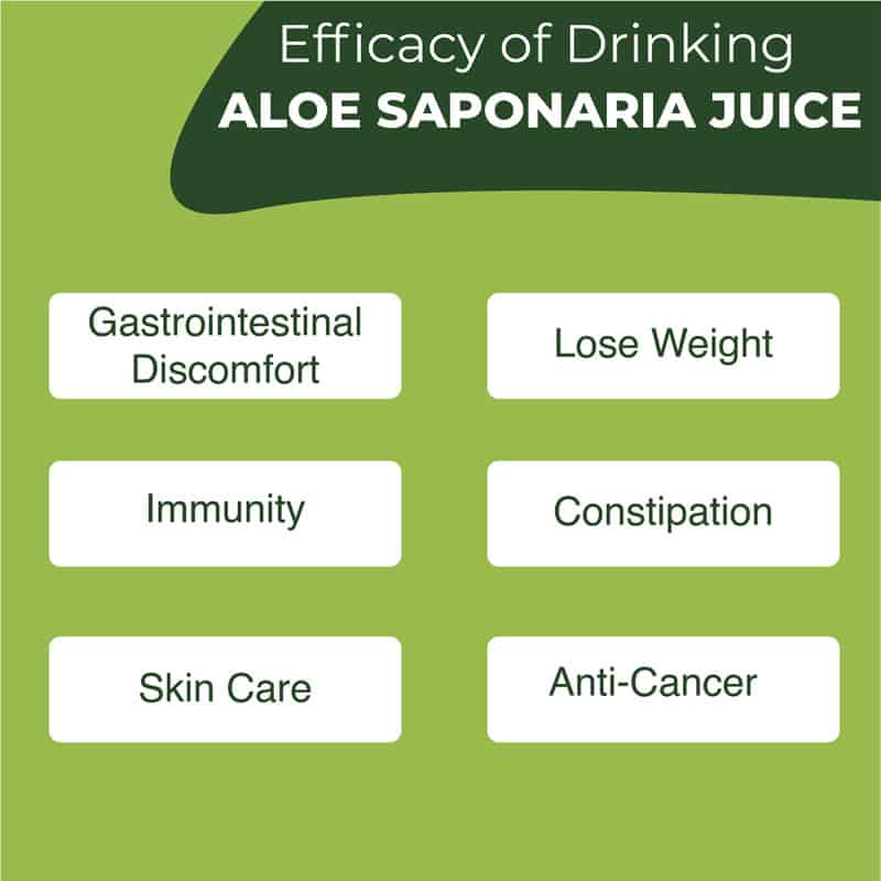 KDYALOE Organic Aloe Saponaria Juice Drinkable Konjac Jelly Benefits