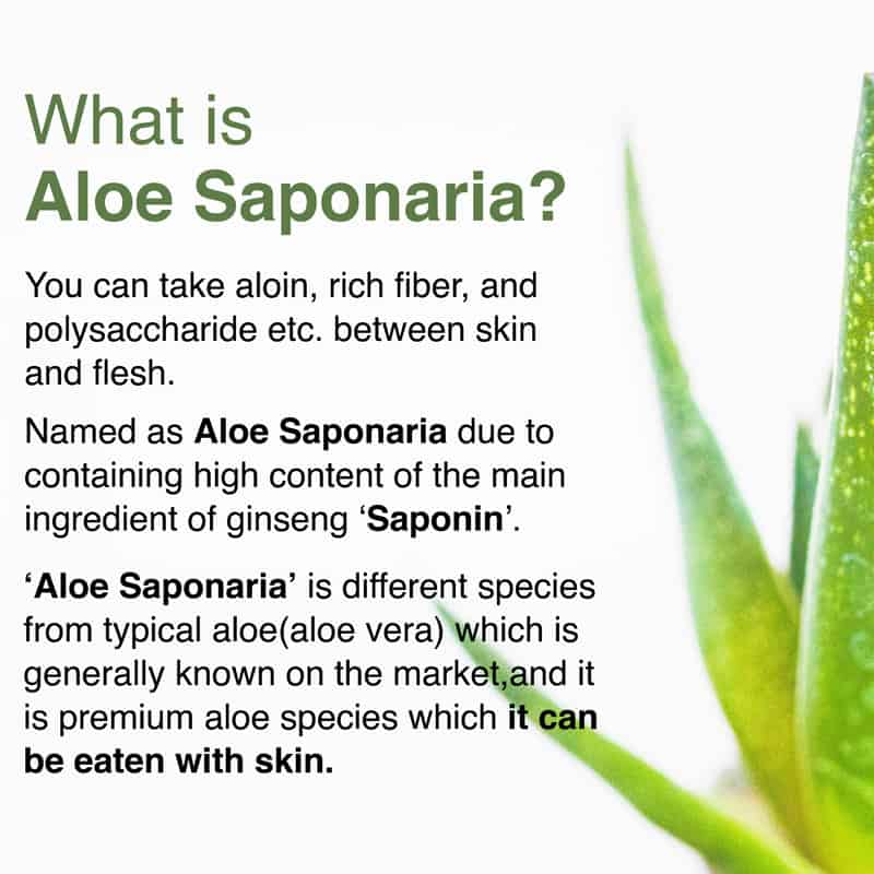 KDYALOE Organic What is Aloe Saponaria? Vs Aloe Vera?